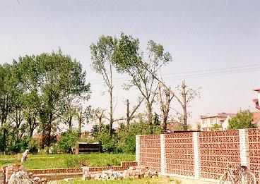 Ulomené koruny stromů u fotbalového hřiště (lokalita 2 na obr.8). Foto autor.