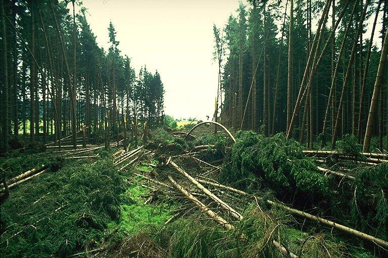 Průsek v lese severně od Prachomet (302 kB)