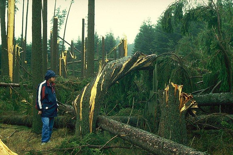 Ukroucený strom (277 kB)