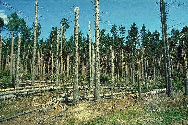Stromy poničené microburstem (348 kB)