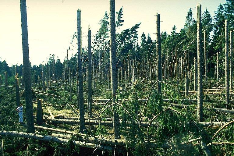 Ohnuté stromy na kraji průseku (325 kb)