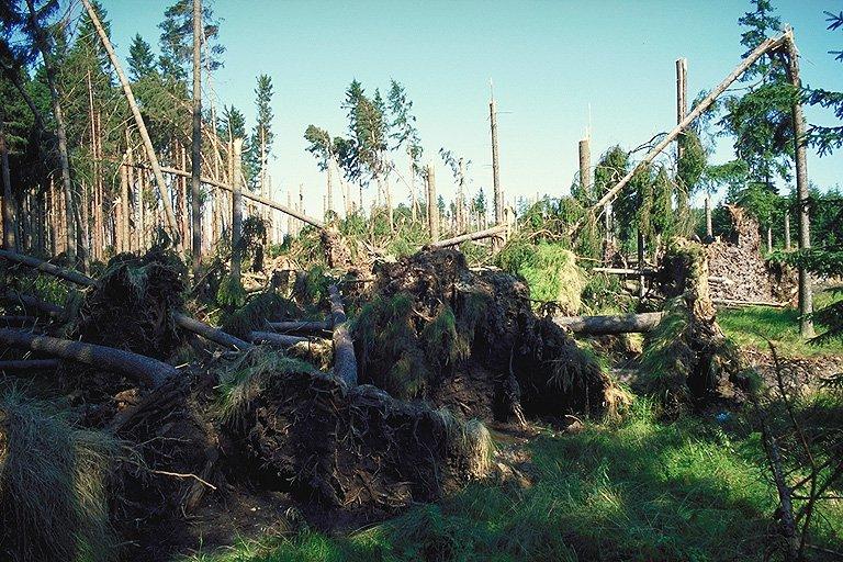 Vyvrácené stromy na začátku průseku (316 kB)