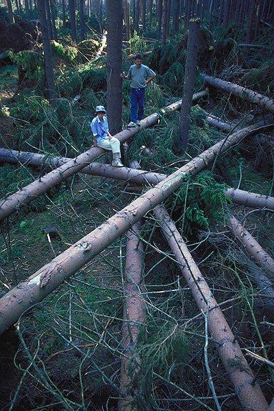 Hnízdo stromů  (208 kB)