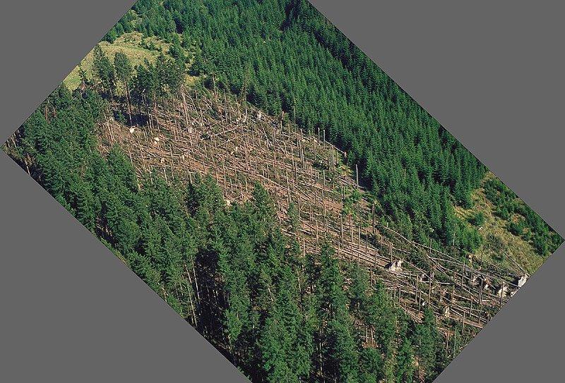 Severní část průseku, pohled od západu  (261 kB)